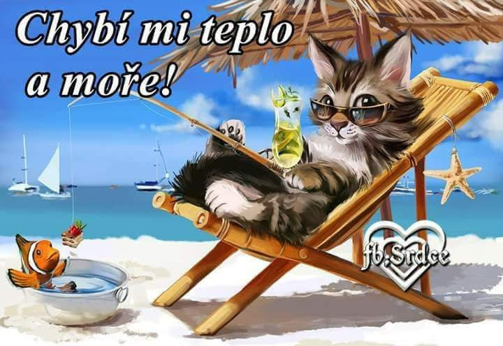 pláž kočka