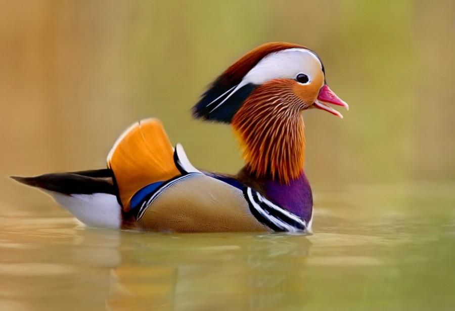 birdie08.jpg